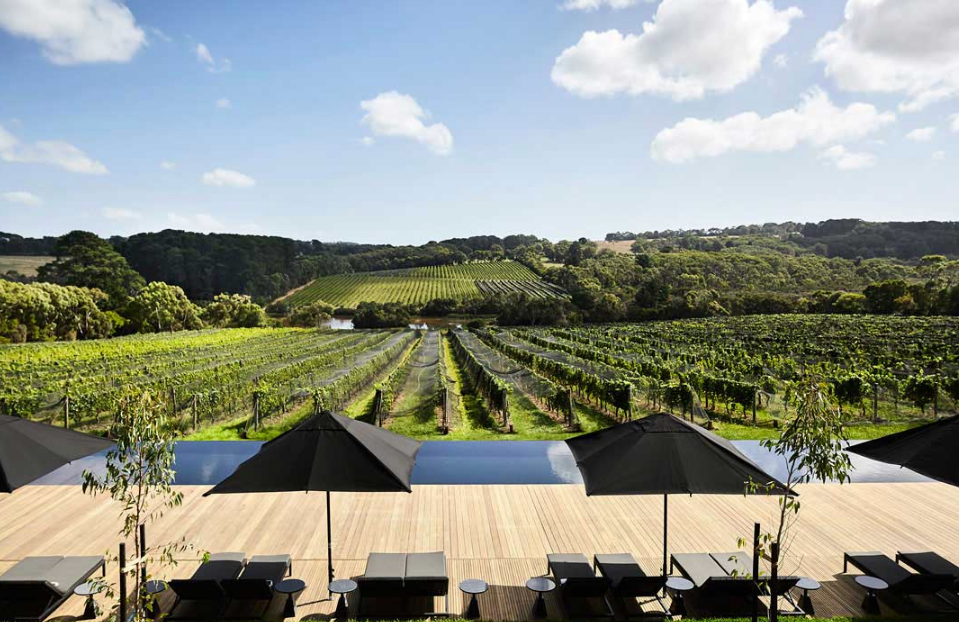 Discovering the Winery Tour in the Yarra Valley